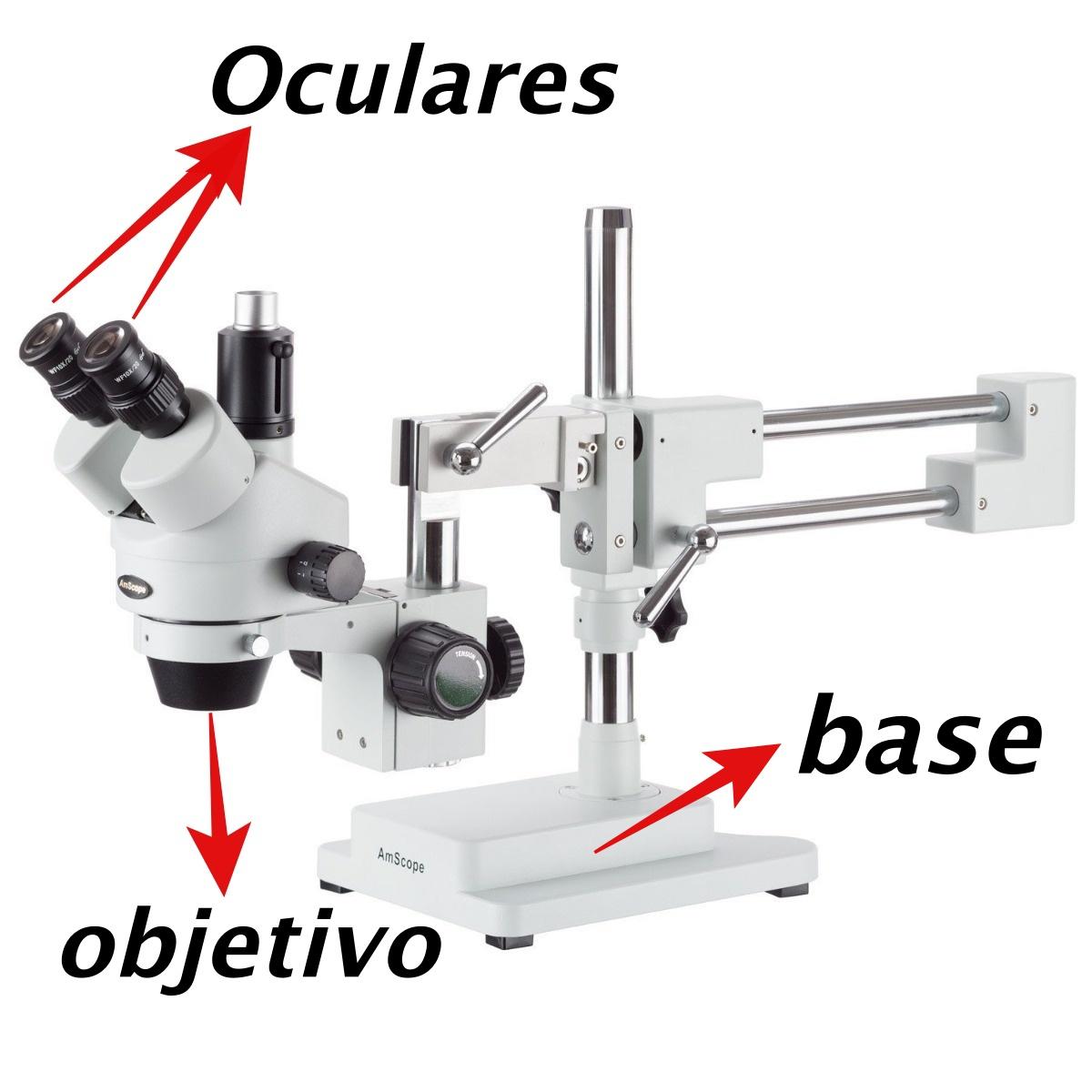 Principales componentes de un microscopio
